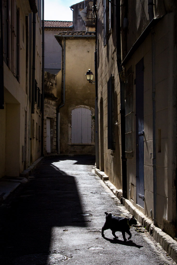 Fat Cat - Saint-Rémy-de-Provence, France