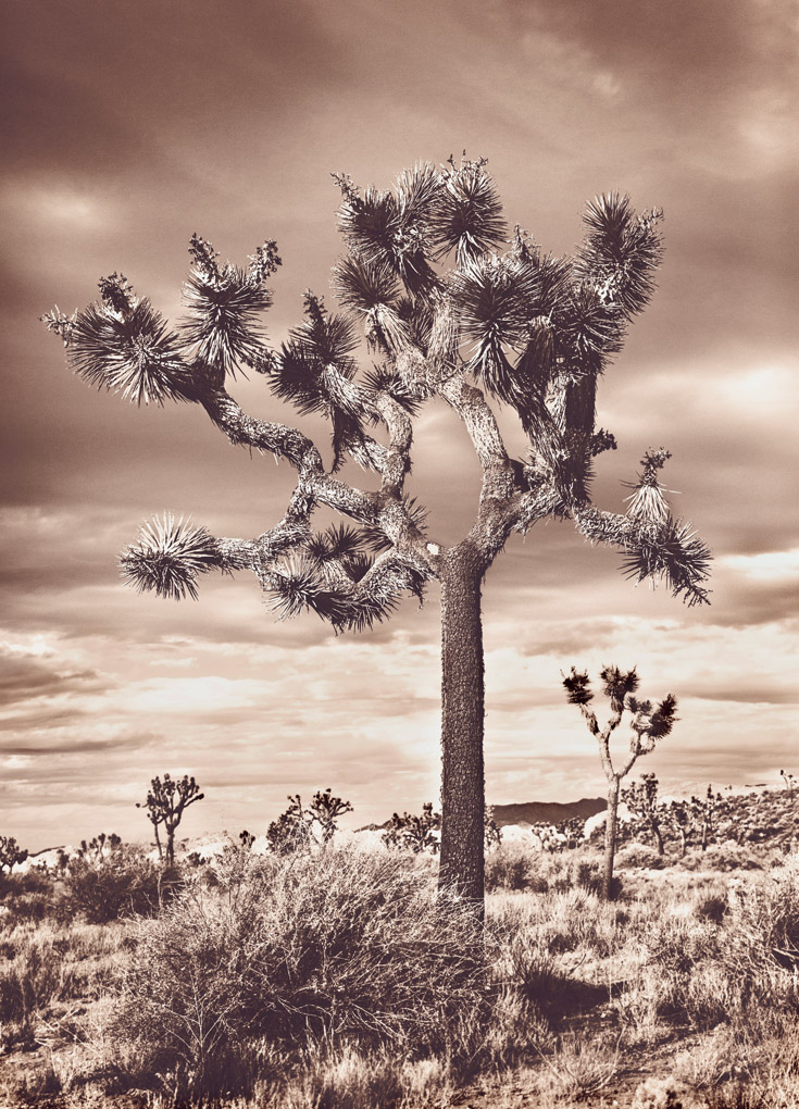 Joshua Tree National Park -  California, USA