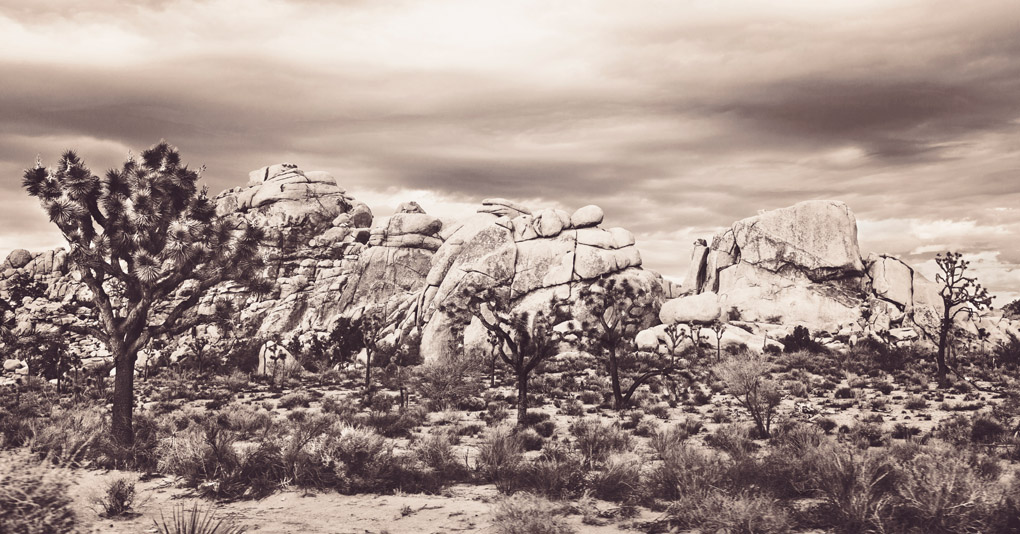 Joshua Tree National Park, California, USA