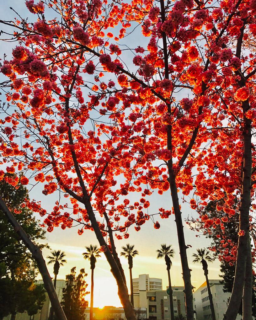 Pasadena, California, USA