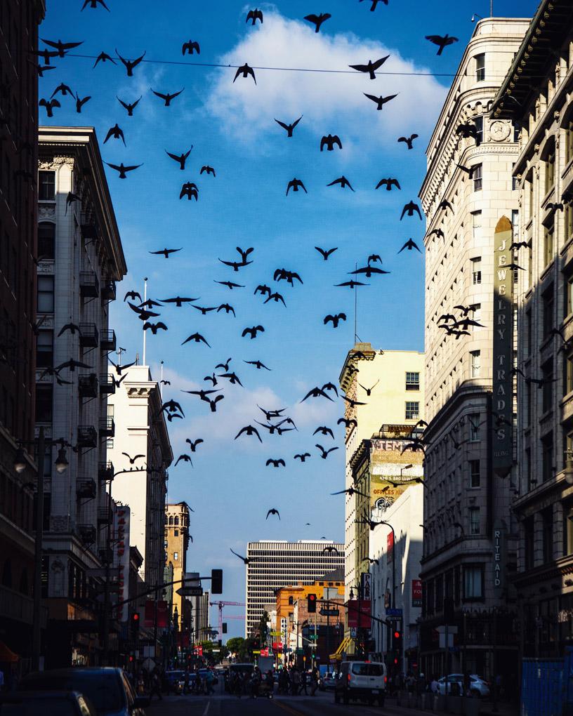 Birds - Los Angeles, USA